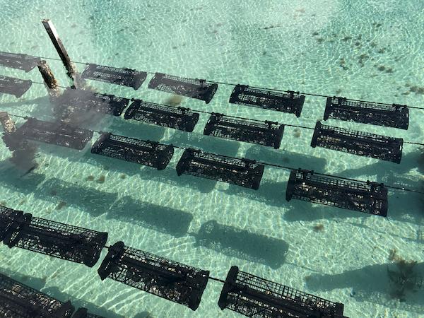 Oyster Farming Basket System
