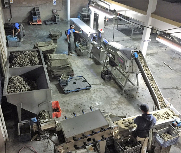 Factory of Oyster graders