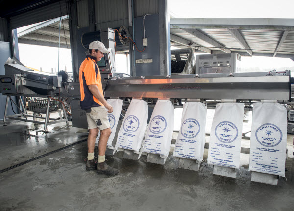 Man standing in front of the machine with sacks
