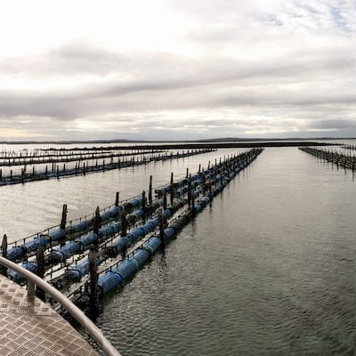 Australia's long line oyster basket system and SED Graders welcomed in Japan