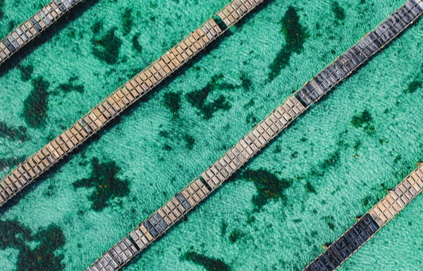 Turquoise water and rows of an oyster farm