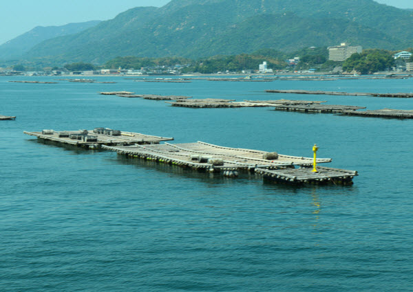 Floating Oyster farm at the sea