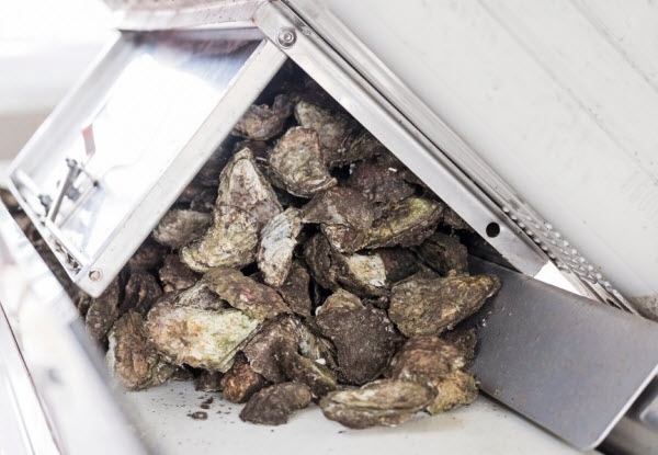 Oysters in a machine