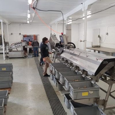 The innovative developments in bulk handling oysters