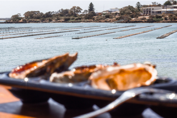 Empty oysters lined in front of the oyster farm